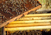 صادرات عسل ایران به آفریقای جنوبی به تعویق افتاد