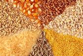 واگزاری مسوولیت ثبت سفارش نهادهها به وزارت جهاد کشاورزی