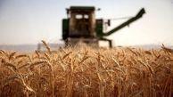 محدودیت صادراتی محصولات غذایی روسیه به بدنبال افزایش اخیر قیمتها