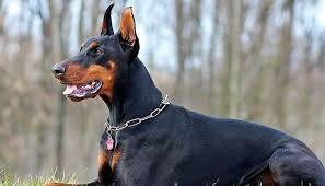 کشف هروئین توسط سگ موادیاب در گمرک مرزی بازرگان  + فیلم