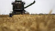 خرید تضمینی بیش از دو میلیون تن گندم از ابتدای فصل برداشت