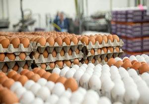 کاهش نرخ تخممرغ ادامه دارد/ هر کیلو ۴ هزارتا ۶۰۰ تومان