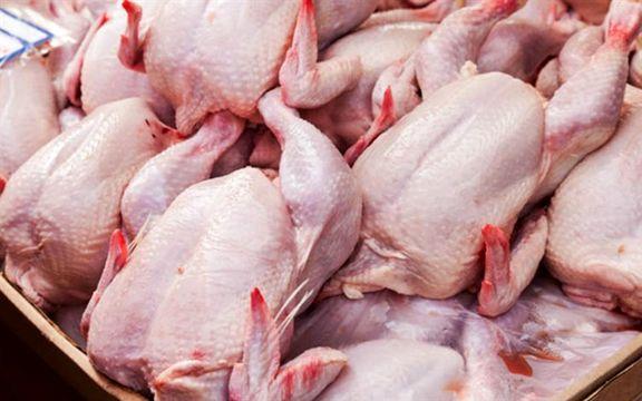 قیمت مرغ تا نیمه شهریور قصد ارزان شدن ندارد