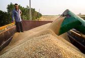 270 هزارتن گندم توسط دولت در دور دوم خرید تضمینی خریداری شد