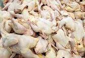 اگر قیمت مرغ کاهش پیدا نکند دولت تصمیم به واردات مرغ می گیرد