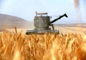 قیمت هر کیلوگرم گندم نان در سال جدید 2500 تومان تعیین شد