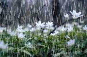 بارش شدید باران در تابستان فریمان