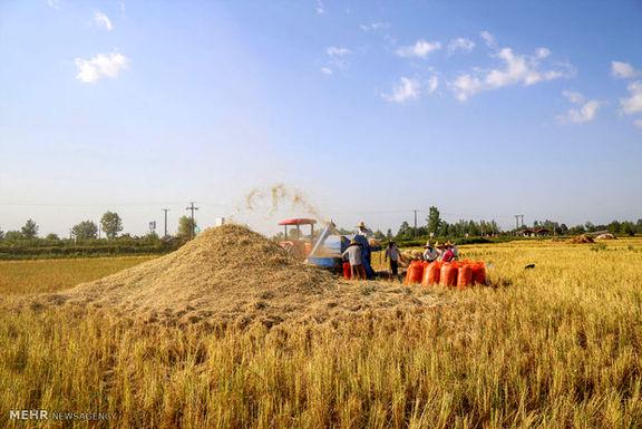واردات برنج ادامه پیدا می کند