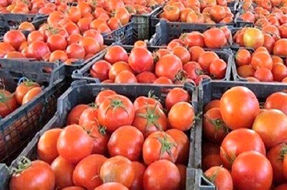 برگشت خوردن گوجه فرنگی صادراتی عراق به دلیل کیفیت پایین محصول