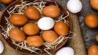 تا اطلاع ثانوی صادرات تخم مرغ ممنوع