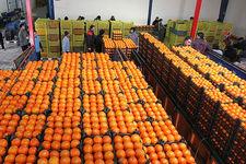 عرضه میوه تنظیم بازاری تا 15 فروردین ماه ادامه دارد/عرضه 19 هزار و 741 تن پرتقال تامسون برای شب عید
