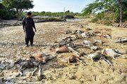 سیل 930 میلیارد تومان به کشاورزی سه استان خسارت زد