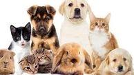 بازگشت حیوانات خانگی به آغوش صاحبانش بعد از انفجار بیروت