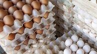 قیمت تخم مرغ در مرغداری ها متعادل است