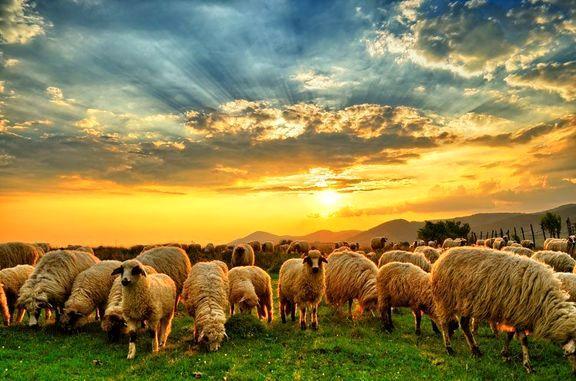 شرکتهای گروه کشاورزی بورس در اسفند چه کردند؟