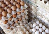 تخم مرغ شانهای 22 هزار تومان است