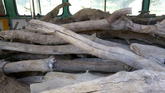 حمله مسلحانه قاچاقچیان چوب در چهاردانگه + فیلم