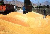 خرید گندم از 8 میلیون تن گذشت
