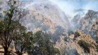 شعله ورشدن آتشدر  جنگلها و مراتع