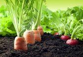 صادرات محصولات کشاورزی زنجان به 10 کشور دنیا