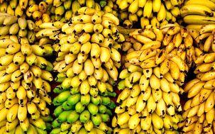 قطع واردات موز از اکوادور دلیل اصلی گرانی موز است