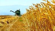 آنالیز قیمت تمام شده تولید گندم به سازمان بازرسی کل کشور ارسال شد/  هر کیلوگرم گندم  2559.2 تومان
