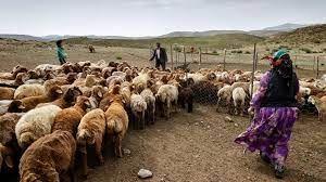 میانگین قیمت دام زنده ۴۵ هزار تومان / دام عشایر و روستاییان صادر می شود