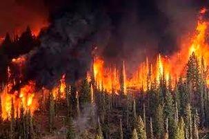 آتش سوزی پارک جنگلی افرا مهار شد