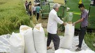 واردات برنج موقتا ممنوع شد