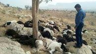 علت تلف شدن ۴۰۰ راس دام در صالحآباد چه بود؟