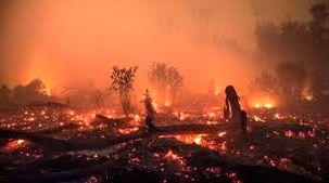 جنگل کوه سیاه دشتستان در آتش سوخت + فیلم