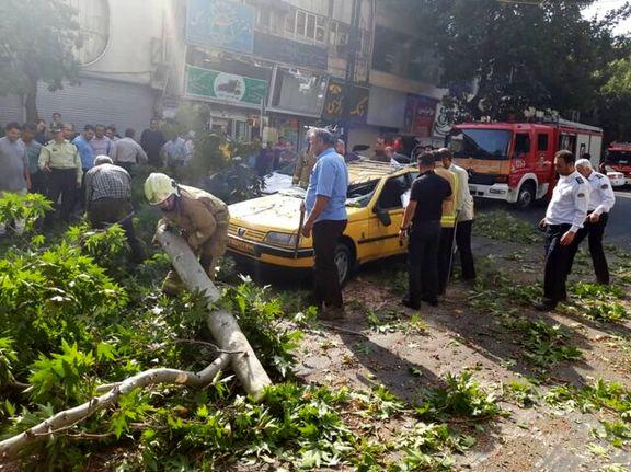 سقوط ناگهانی درخت چنار در خیابان شریعتی+ عکس