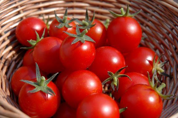 صادرات فرآورده های گوجه فرنگی تا 30 بهمن ماه ادامه دارد