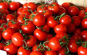 قیمت گوجه تا چند روز دیگر کاهش می یابد