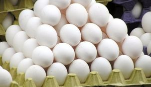 سالانه ۱۶ میلیارد عدد تخم مرغ در کشورمان تولید و مصرف میشود