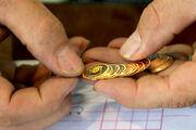 افزایش 50 هزار تومانی قیمت سکه در بازار / هر گرم طلا به 485 هزار تومان رسید