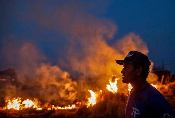1.7 میلیون هکتار از جنگلهای آمازون در بولیوی نابود شدند