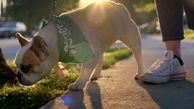 گردش سگ در پارک های لواسان ممنوع شد