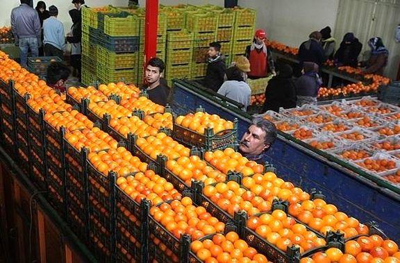 آغاز توزیع میوه شب عید از امروز / میوه شب عید با 10 تا 20 درصد تخفیف توزیع می شود