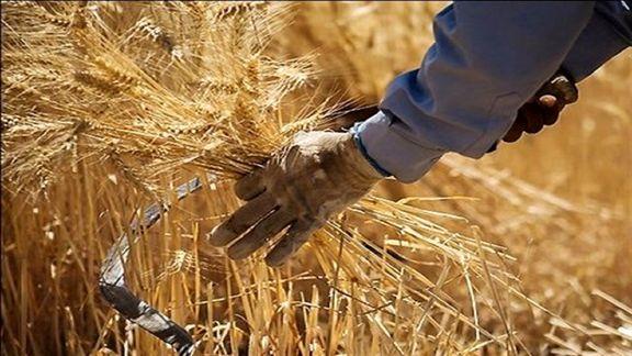 آموزش و تحقیق به اقتصاد گندمگار و افزایش تولید داخلی کمک میکند