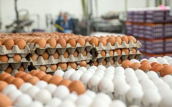 صادرات تخم مرغ خوراکی و غیرخوراکی آزاد شد