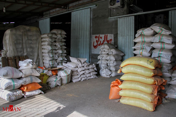 برنج داخلی قربانی واردات بی رویه!