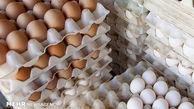 قیمت تخم مرغ در مرغداری کیلویی 15 هزار تومان اعلام شد