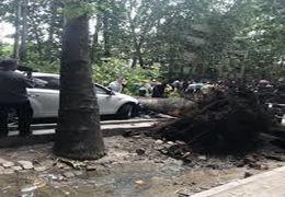 سقوط درخت بر روی ماشین