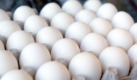 کشتار مرغها موجب کاهش تولید تخم مرغ شد
