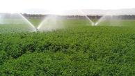 فرآوری 25 میلیون تن آرد  و 14 میلیون تن تولید گندم