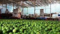 اسامی محتکران لیموترش به قوه قضائیه اعلام شد / قیمت لیموترش در روزهای آینده کاهش مییابد