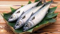 انواع ماهی + قیمت