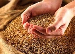 دولت برای خرید گندم از این پس قیمت تضمینی را جایگزین خرید تضمینی می کند