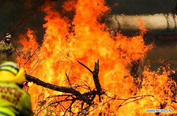 بازداشت 183 استرالیایی به جرم آتشسوزی در جنگلهای این کشور